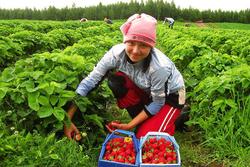 Кто они, украинцы в Польше – трудовые мигранты или беженцы?