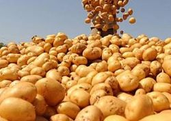 Колонизаторы Марса смогут выращивать картофель