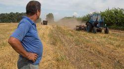 Какие урожаи прогнозируют эксперты украинским аграриям в этом году