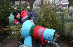 Новогодние елки: В Дании ими можно отапливать 3 тысячи домов в течение года