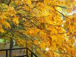 """Украинцев ждет холодный октябрь – народные синоптики """"сели в лужу"""""""
