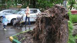 Ураган повалил более тысячи деревьев в Москве