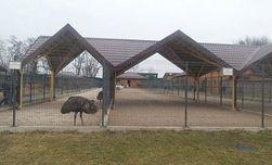 Зверей Януковича отвезут в зоопарк Киева
