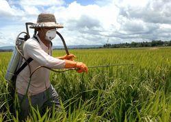 Пестициды в овощах убивают сперму мужчин – ученые