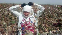 Учащиеся колледжа в Узбекистане голодают на хлопковом поле