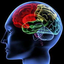 Ученые нашли нестареющую часть мозга человека