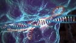 Ученые перешли к тестам на добровольцах прорывных технологий продления жизни