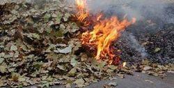 Сжигание листьев в Ташкенте грозит жителям города - экологи