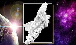 Внеземная жизнь существует – ученые
