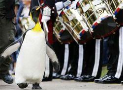 Пингвин стал бригадным генералом Королевской гвардии Норвегии