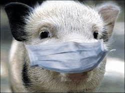 Кто кому подкладывает свинью?