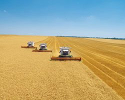 Потери аграриев в текущем МГ - 40 млрд. грн.