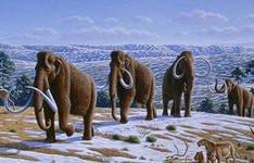 Дайверы нашли останки древних мамонтов на дне Волги