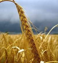 В скором будущем Украина будет транспортировать зерно в Азию - эксперты