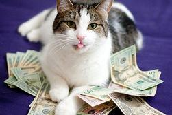 Кот получает завещание