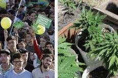 Вслед за однополыми браками Уругвай легализовал марихуану