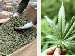 Аляска близка к легализации марихуаны – жители штата одобряют