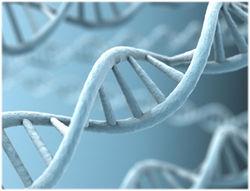 Ученым удалось обнаружить белок, отвечающий за старение мозговых клеток