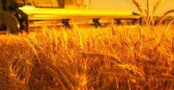 Продразверстка в «ДНР»: незарегистрированное зерно будет реквизировано