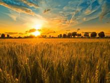 Эксперты о последствиях скупки Китаем аграрных угодий в Украине