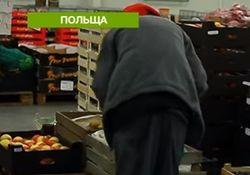 В Польше неуклонно растет количество трудовых мигрантов из Украины