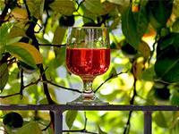 Узбекистан хочет привлечь туристов винами