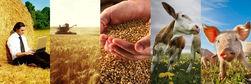Российский аграрный сектор