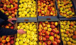 Как Молдова переживет российское эмбарго на фрукты и консервы