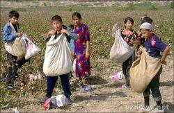 Узбекистан: за пропуск хлопковой повинности школьников могут оставить на второй год