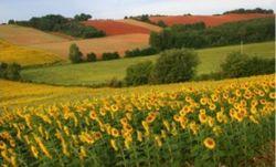Причины убытков агрохолдинга в Украине  - эксперты