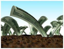 Инвесторов США заинтересовал агропромышленный комплекс Украины