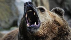 В Хабаровске медведь разгромил торговый центр