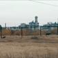 На территории Алчевского коксохима пасут коров