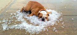 Почему в последнее время участились периоды аномальной жары?