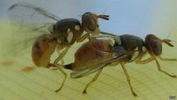 Европа хочет бороться с вредными насекомыми с помощью генной инженерии