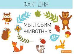 """""""Добрые админы"""" рассказали четыре неизвестных факта об Одноклассниках"""