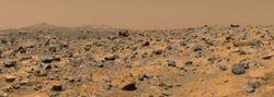 Ученые провели исследование: могут ли лишайники выжить на поверхности Марса