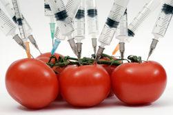Аграрии лоббируют разрешить использовать ГМО семена: последствия для Украины