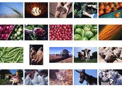 Выливать молоко в ямы и забивать коров не будем – аграрный министр Эстонии