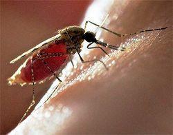 Ученые объяснили, почему комары чаще кусают ночью