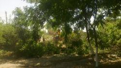 Население Кувасоя недовольно вырубанием садов