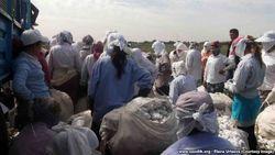 Хорезмские учащиеся жалуются, что на сборе хлопка в Узбекистане их заставляют чистить туалеты