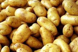 Картофель в Беларуси бьет рекорды подорожания