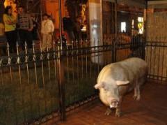 Украинские животные-предсказатели запутались в прогнозах