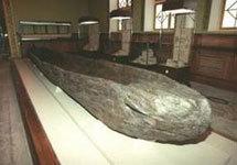 Открытие археологов: В Бразилии люди жили 50 тысяч лет назад