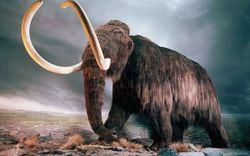 Американские ученые подсадили гены мамонта слону