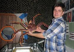 Гигантский краб станет главным оракулом ЧМ по хоккею в Беларуси