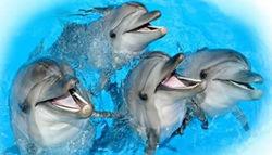В Крымском дельфинарии арестованы животные — причины