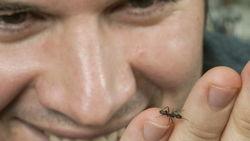 Силу и прочность роботов помогут увеличить муравьи
