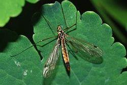 К войне против СССР немцы готовили комаров-убийц